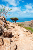 Bottle tree and Dragon Blood trees growing on the rocks, Socotra, Yemen Stock Image
