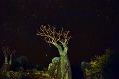 Bottle tree in the night sky. Dark night photo of the lost world. Stock Photos