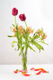 A bottle of tulip. The close-up of a bottle of tulip. Some flower petals on the table Stock Image