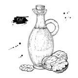 Bottle of walnut oil. Vector Hand drawn illustration. Glass pitcher vintage Stock Photography