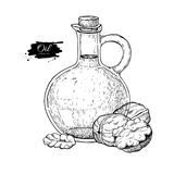 Bottle of walnut oil. Vector Hand drawn illustration. Glass pitcher vintage Stock Images