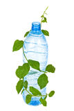 Bottle with water drink and foliage Stock Images