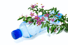 Bottle of water with a sprig of flowers Royalty Free Stock Photography
