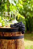 Bottle of white wine with wineglass and grapes in vineyard Stock Photos