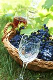 BOTTLE OF WINE. AND GRAPES IN BASKET stock photography