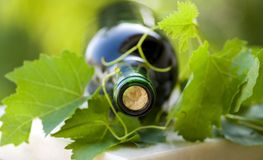Bottle of wine Stock Image