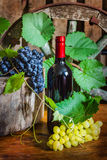 A bottle of wine on the background of the vine Royalty Free Stock Images