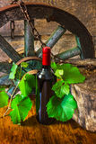 A bottle of wine on the background of the vine Stock Image