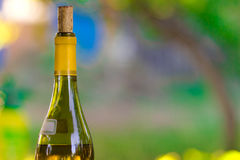 Bottle of wine Stock Photos