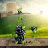 Bottle of Wine and a glass made by of grape leaves and a bunch of grapes on a wooden background. With a blurred background view of the Castle, mill and the royalty free stock images