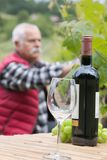 Bottle wine and glass man picking grapes in background Stock Images