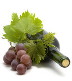 Bottle of wine with grape leafs and vine stock photography