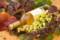Bottle of wine with grapes and. A bottle of white wine with grapes and brightly coloured wine leaves royalty free stock image