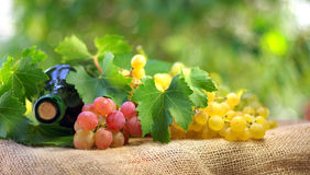Bottle of wine and grappes. Royalty Free Stock Image
