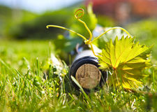 Bottle of wine on the green grass outdoors Royalty Free Stock Photo
