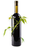 Bottle of wine in green leaves Stock Images
