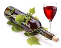 Bottle of wine in the vine Royalty Free Stock Photography