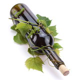 Bottle of wine in the vine Stock Images