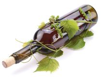 Bottle of wine in the vine Royalty Free Stock Photos