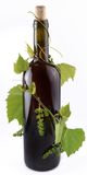 Bottle of wine in the vine Royalty Free Stock Photo