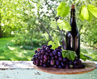 A bottle of wine, vine and bunch of grapes on a background of th Stock Image