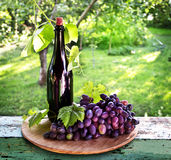 A bottle of wine, vine and bunch of grapes on a background of th Stock Photography