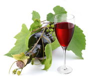Bottle of wine in the vine. Stock Photo