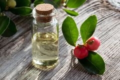 A bottle of wintergreen essential oil with wintergreen leaves an. A bottle of wintergreen essential oil on white painted wood, with wintergreen berries and Stock Photography