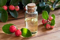 A bottle of wintergreen essential oil on a wooden table. A bottle of wintergreen essential oil with fresh wintergreen twigs on a wooden table Royalty Free Stock Photography