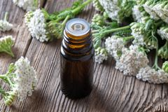 A bottle of yarrow essential oil with fresh yarrow stock photography