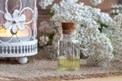 A bottle of yarrow essential oil with yarrow flowers royalty free stock image