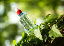 Bottled spring water Stock Image
