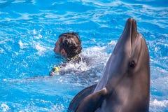Bottlenose delfin w błękitnej basen wodzie zdjęcia royalty free