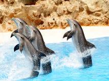 bottlenose delfiny obrazy royalty free
