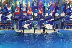 Bottlenose-Delphine oder großes, Lat der Großen Tümmler Tursiops truncatus auf der Leistung mit den Bällen im Sochi Dolph lizenzfreie stockfotos