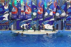Bottlenose-Delphine oder großes, Lat der Großen Tümmler Tursiops truncatus mit Bällen in Sochi Dolphinarium in Riviera-Park stockbilder