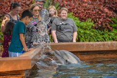 Bottlenose dolphin splashing water to people with their nose at Seaworld in International Drive area. stock photo