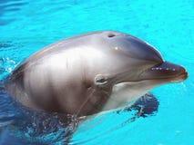 bottlenosedelfin royaltyfri foto