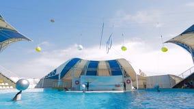 Bottlenosedolfijnen die met Ballen in Pool zwemmen stock video