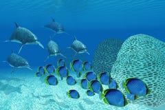 Bottlenosedolfijnen Onderwater royalty-vrije illustratie