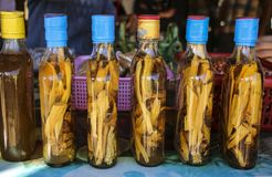 Bottles of alcohol on the bark of a palm in one of the villages stock image