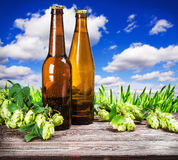 Bottles of beer and hops branch Royalty Free Stock Photography