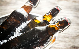 Bottles of beer in ice cubes Stock Photo