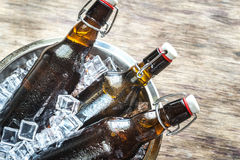 Bottles of beer in ice cubes Stock Images