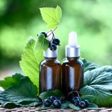 Bottles with blackcurrant oil, fresh berries and leaves on a na. Tural green background, bio, organic , nature cosmetics concept stock photography