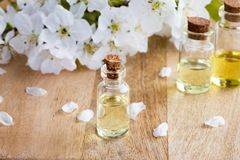 Bottles of essential oil with white blossoms Stock Images
