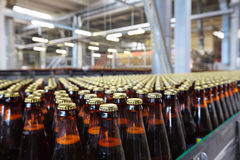 Bottles. The food industry. Glass beer bottles moving on conveyor royalty free stock photography
