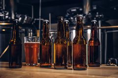 Bottles and glass of craft beer on wooden bar counter at the indie brewery. royalty free stock photography