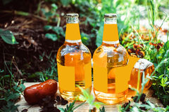 Bottles with golden beer in the grass on board sausage. Three bottles of fresh beer in the grass with sausages in the sun Royalty Free Stock Photos