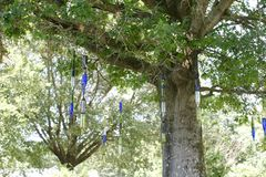 Bottles Hanging from Trees at the West Tennessee Agricultural Research Center. Known for its research on ornamentals, turf grasses, agronomic and horticultural stock photos